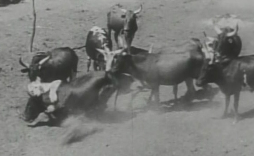 Aus dem Film Untamed Africa